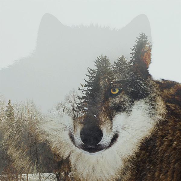museo-ciencias, universidad-navarra, lobo, montaje, bosque, naturaleza